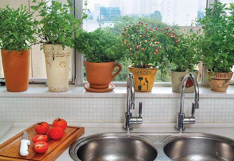 Ideia Decorar Ideias para horta em apartamentos e casas Horta 1