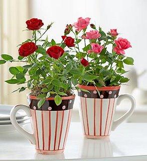 Ideia Decorar Plantas para apartamento 4973466889 3e79c4bf39