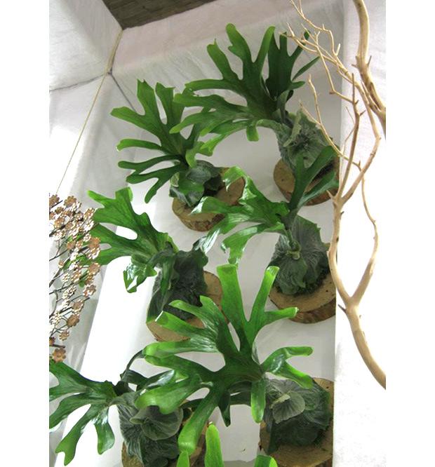 Ideia Decorar Plantas para apartamento Parede Platycerium1