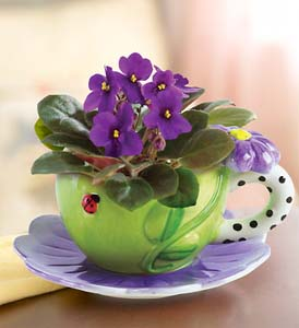 Ideia Decorar Plantas para apartamento violetas 41