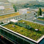 Telhado ecológico