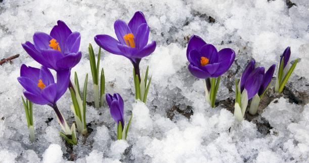 Flores de inverno para decoração
