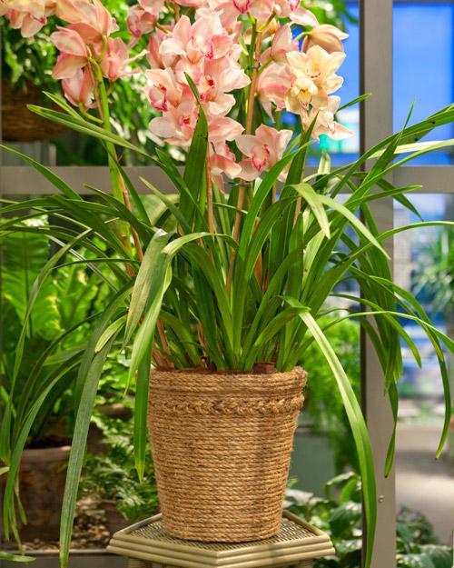 5 ideias criativas para decorar seu jardim - 6