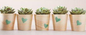Ideia Decorar Objetos inusitados se tornam decoração para casa cropped succulents 0257 mld110690 horiz 11