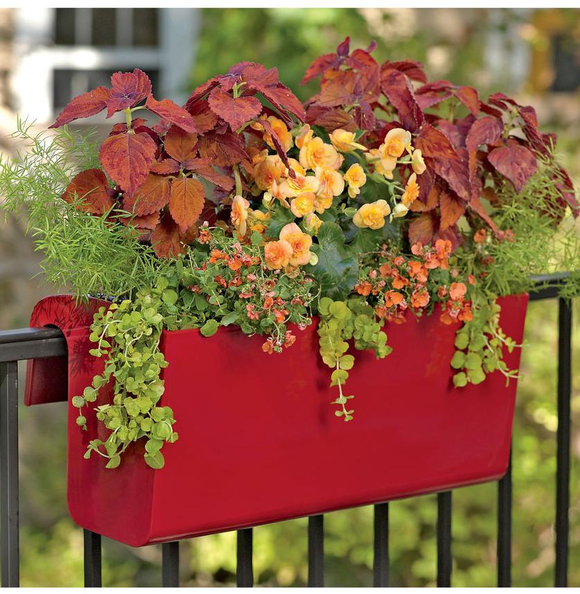Urban Gardening 1