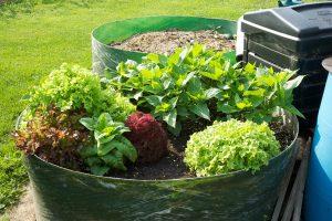 Ideia Decorar urban-gardening urban gardening