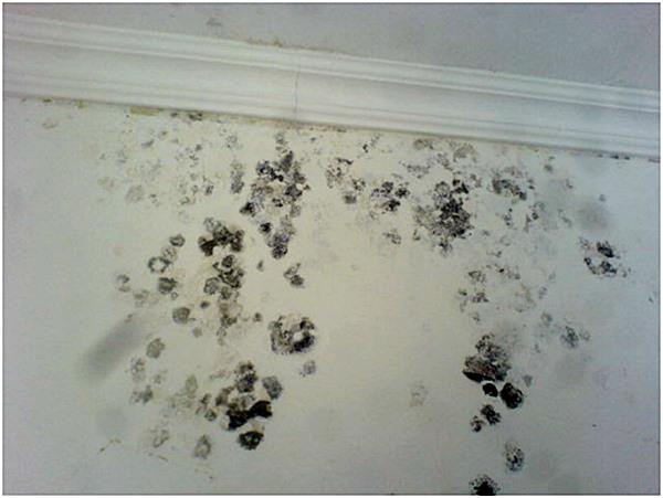 Como tratar umidade nas suas paredes