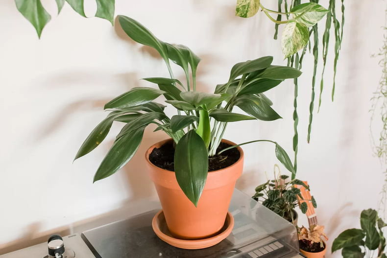 17 plantas para se ter no banheiro