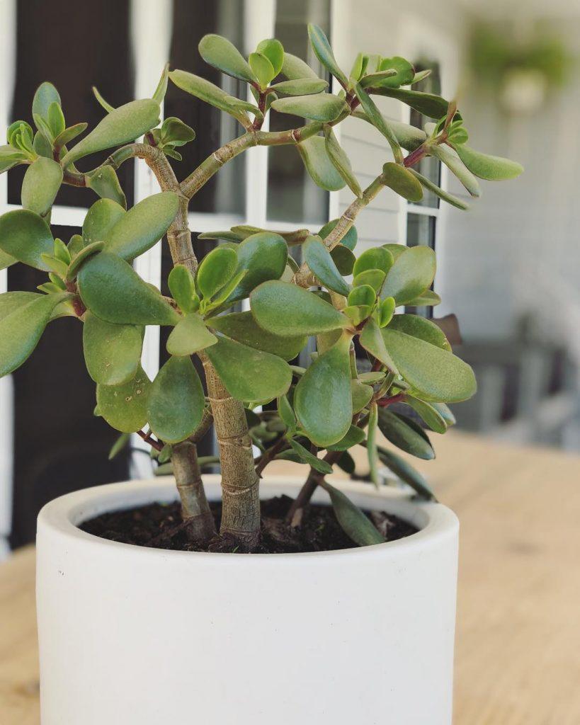 8 plantas que trazem boas energias para casa