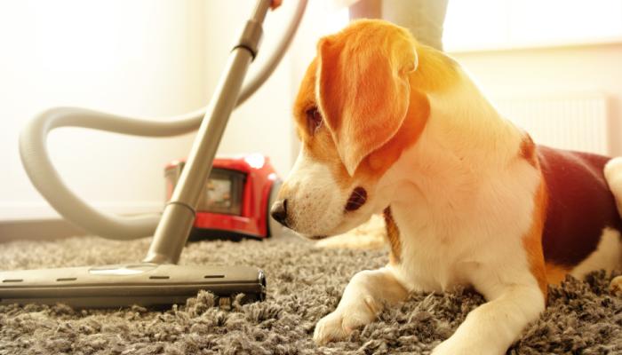 Ideia Decorar Como remover os pelos de animais em casa Como remover os pelos de animais em casa