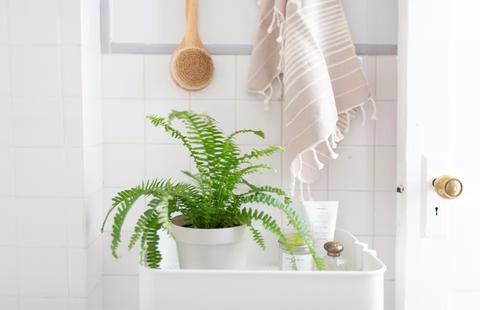 Ideia Decorar 17 plantas para se ter no banheiro THUMB