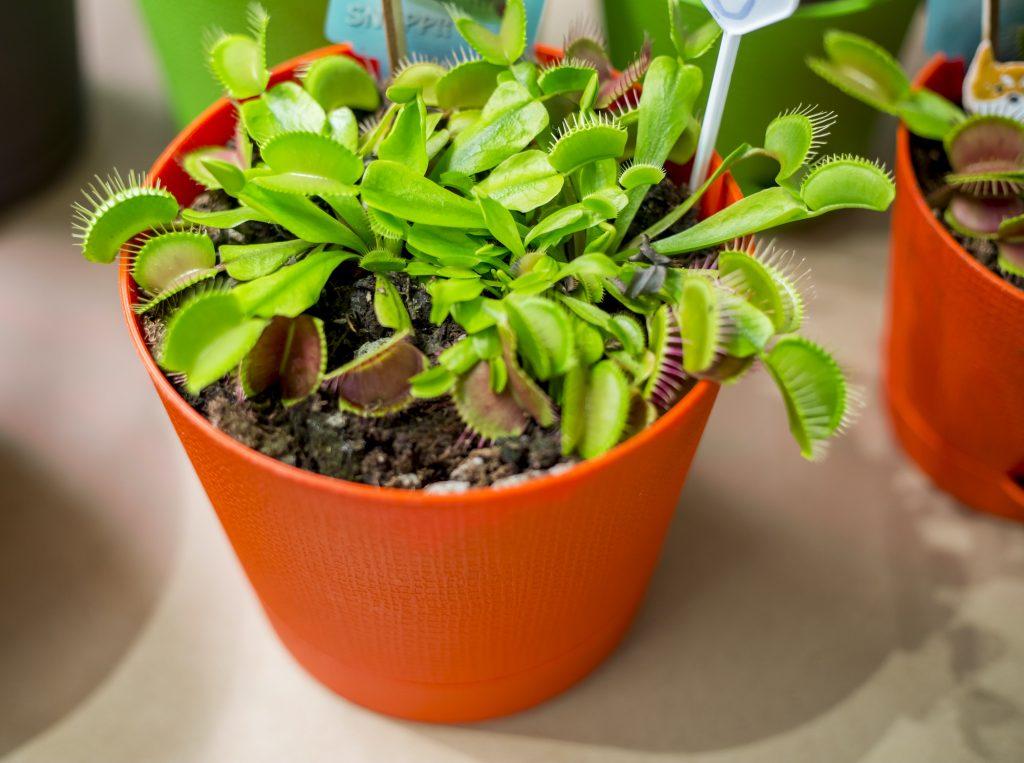 10 plantas que são seguras para cães e gatos